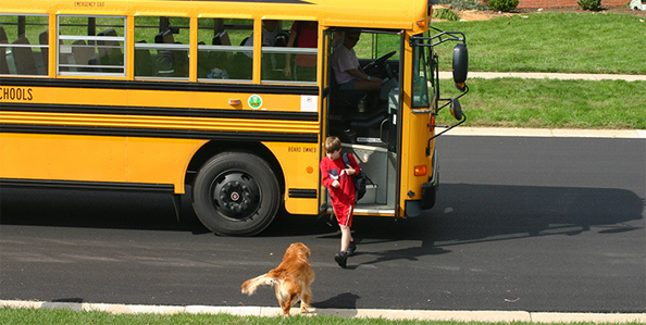 school bus child and dog